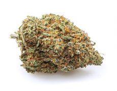 California Haze Cannabis Blüte