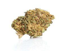 Master Kush Cannabis Blüte Artikel
