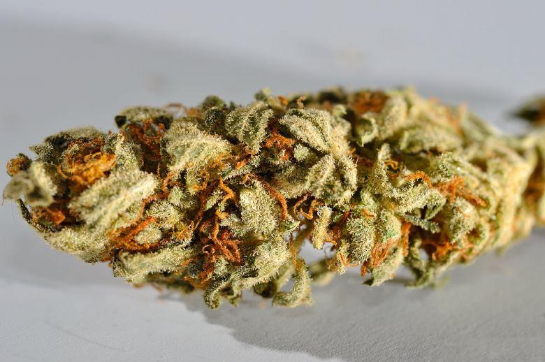 CBD-Gras: das Lemon Haze
