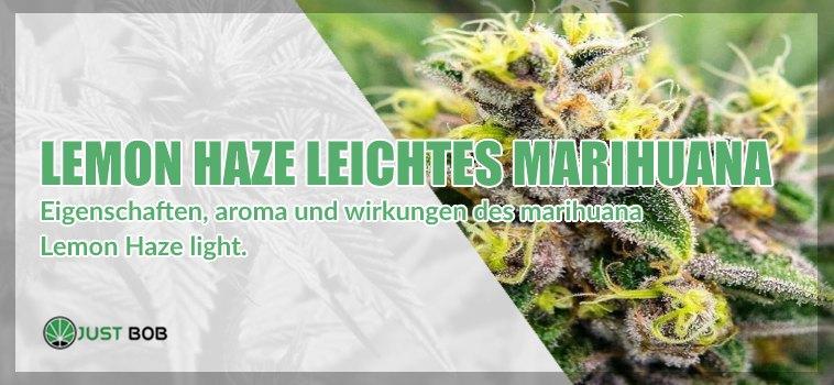 Lemon Haze CBD-blüten: Alles, was Sie darüber wissen müssen