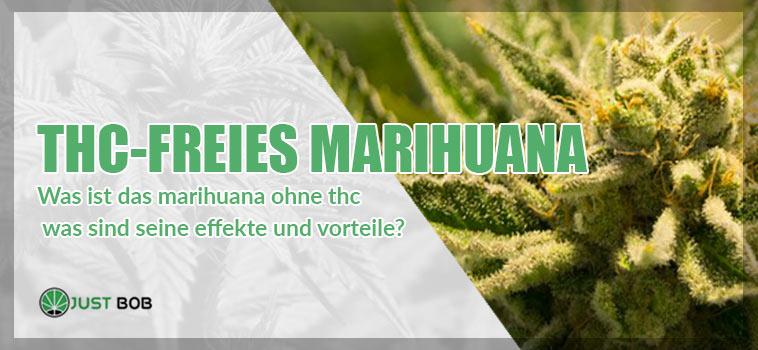 THC-freies Marihuana: Wirkungen und Vorteile