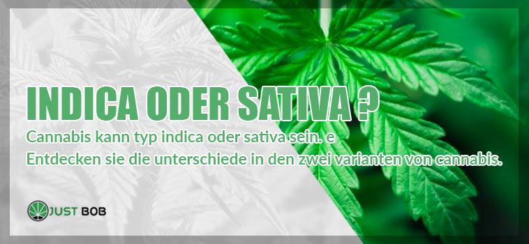 Marihuana Indica oder Sativa: Hier sind die Unterschiede