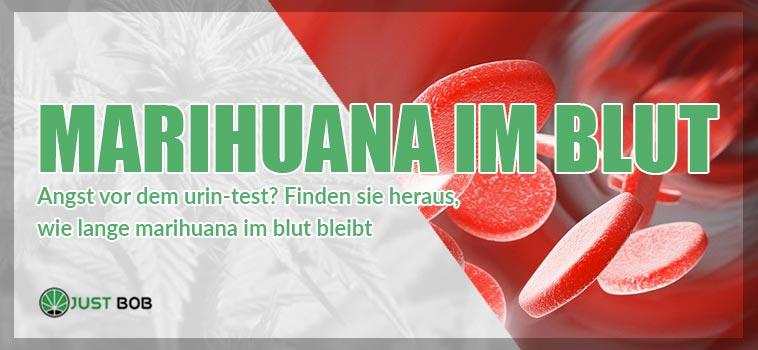 Marihuana im Blut: So lange bleibt es dort?