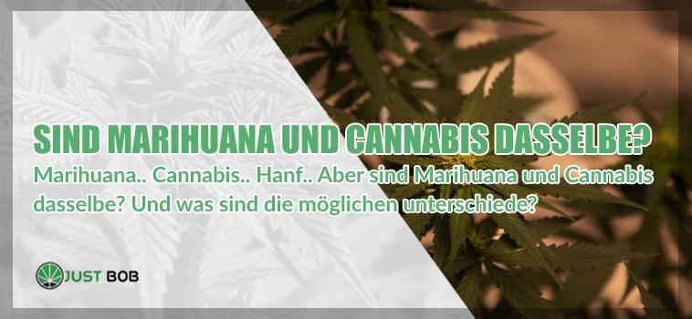 Marihuana Tisane: So bereiten Sie eine ausgezeichnete Infusion vor