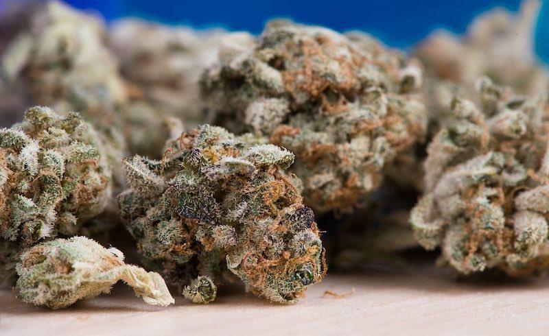 Cannabis Tisane ist eines der ältesten Rezepte