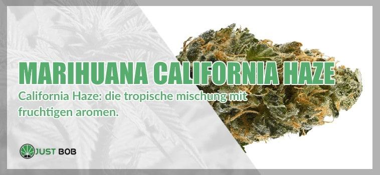 California haze: die tropische mischung mit fruchtigen aromen