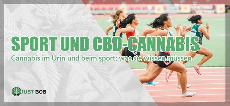 Sport und CBD: Cannabis im Urim