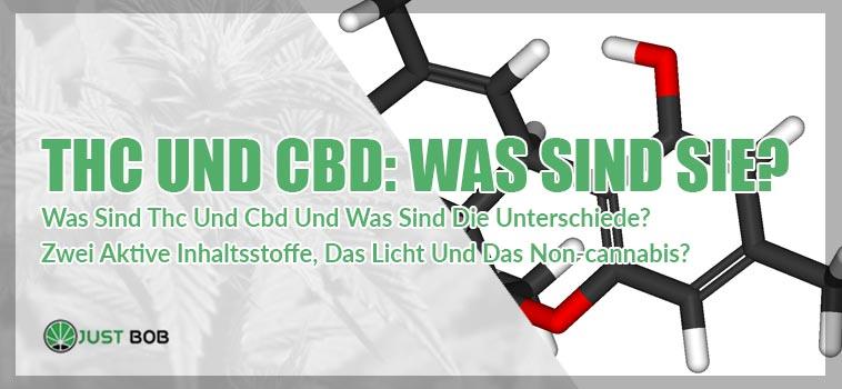 THC und CBD: Was sind sie?