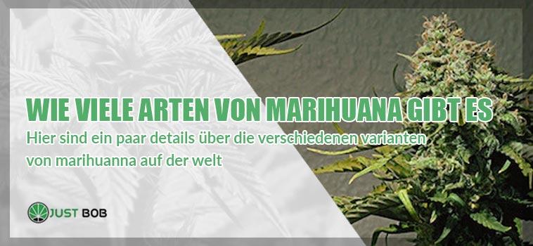 Wie viele Arten von Marihuana gibt es?
