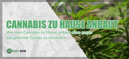 Wie man Cannabis zu Hause anbaut