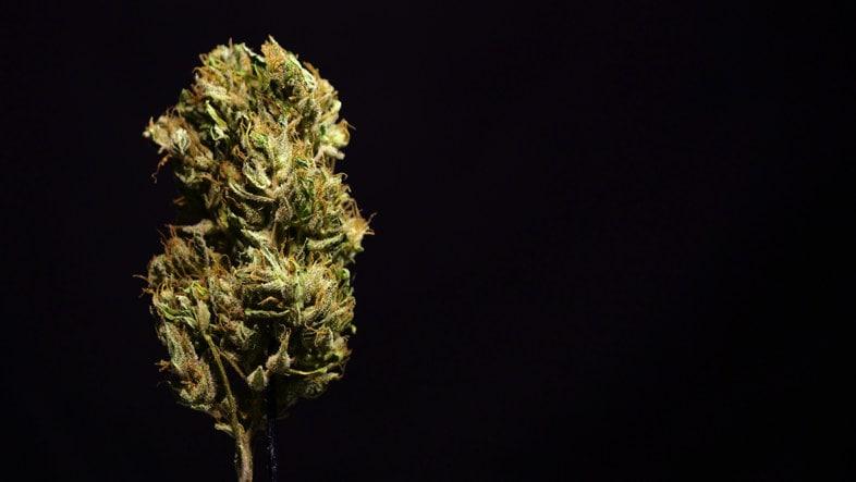 Illegale Marihuana-Liquids: THC-Liquids