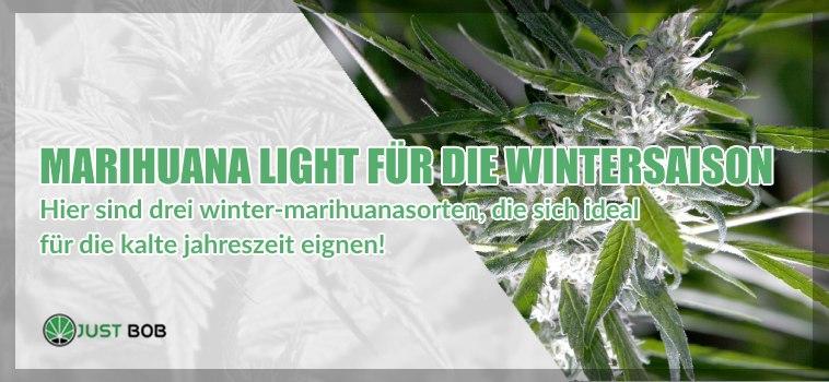 Drei Marihuanasorten, die perfekt für Wintersaison
