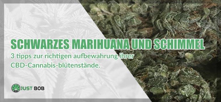 Schwarzes Marihuana und Schimmel