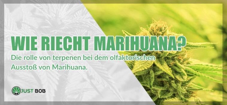 Wie riecht Marihuana?