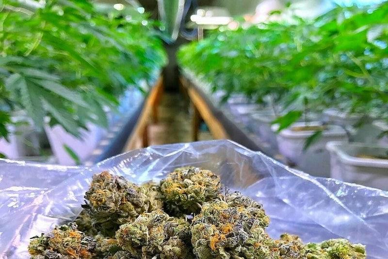 Wirkprinzip von THC