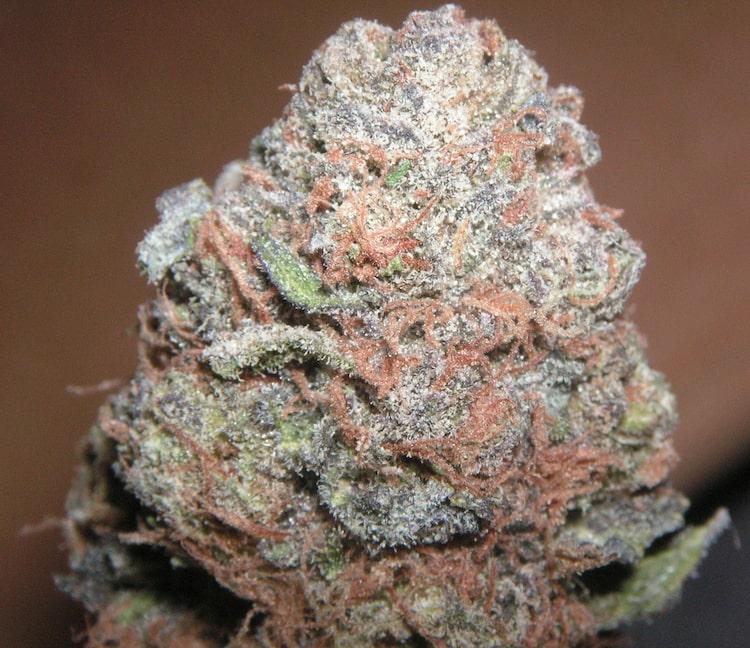 Cannabis Bubblegum CBD